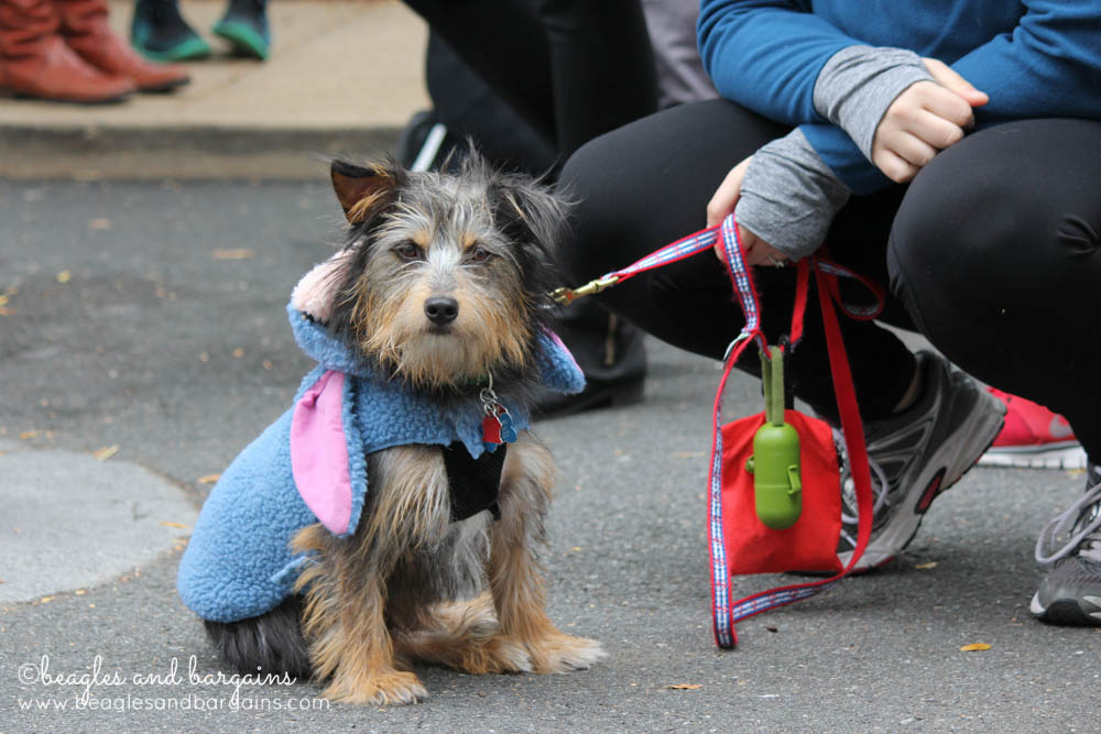 A little pup dressed as Eeyore