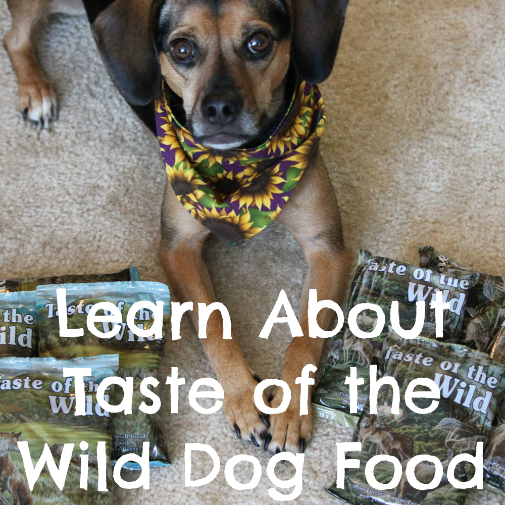 Learn About Taste of the Wild Dog Food