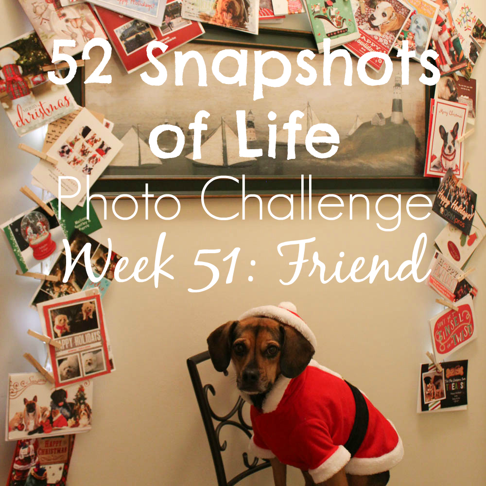 52 Snapshots of Life - Week 51 - Friend - Merry Christmas, Friend