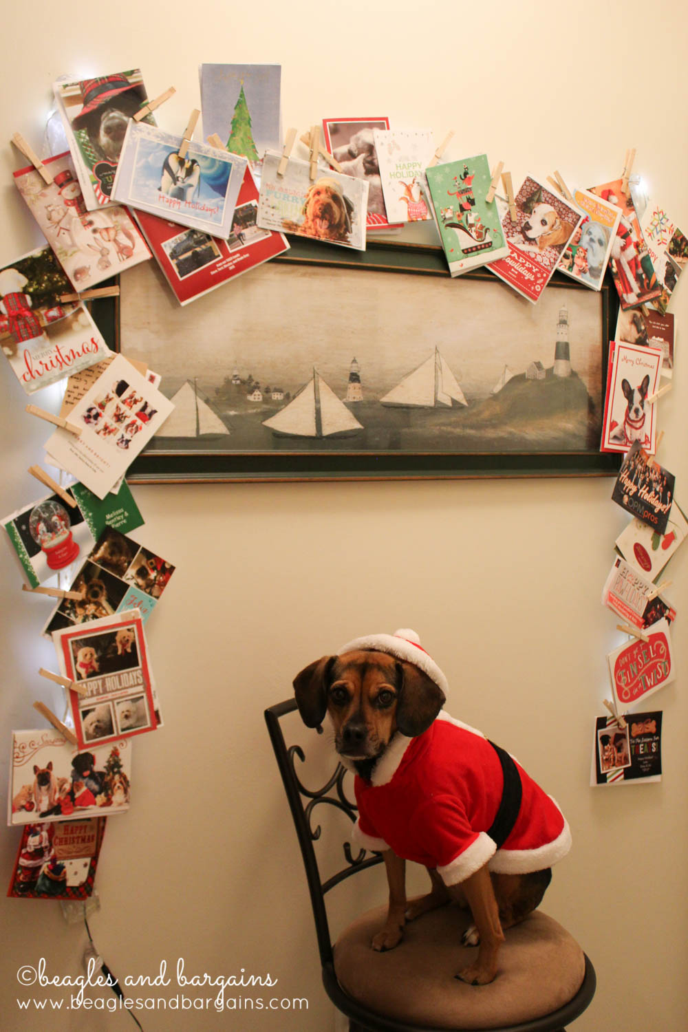 Luna with our 2015 Christmas cards from all our friends and family!