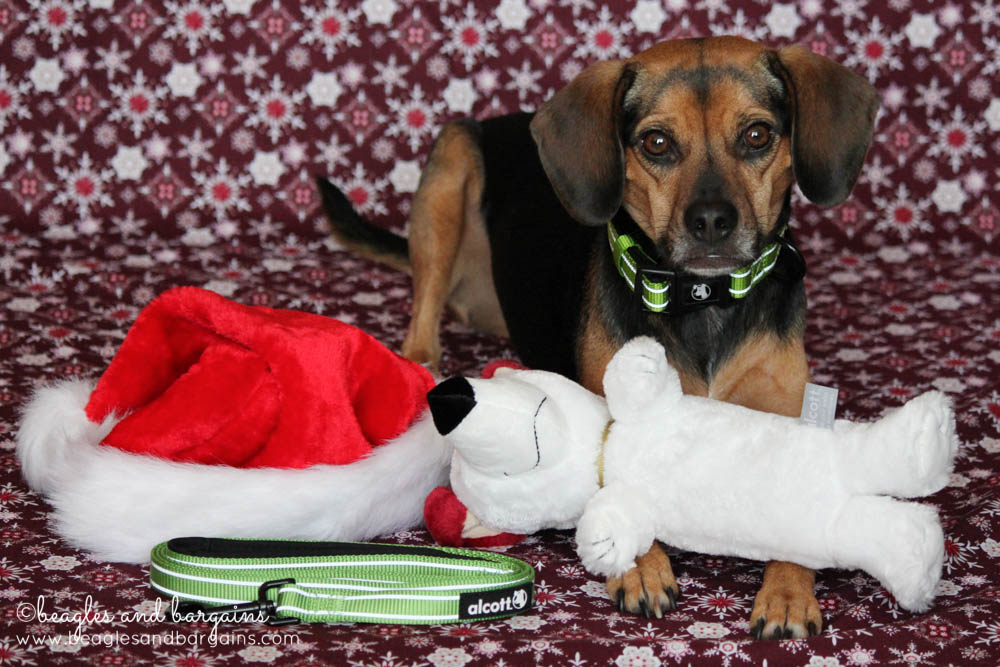 Luna with her Alcott Adventure Collar & Leash Set and Alcott Plush Toy