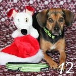 Beagles & Bargains Stocking Stuffer Giveaways 2015 - Day 12 - Alcott Adventure Collar & Leash Set