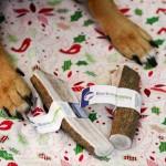 Barkworthies Elk Antlers- Beagles & Bargains Holiday Guide 2015
