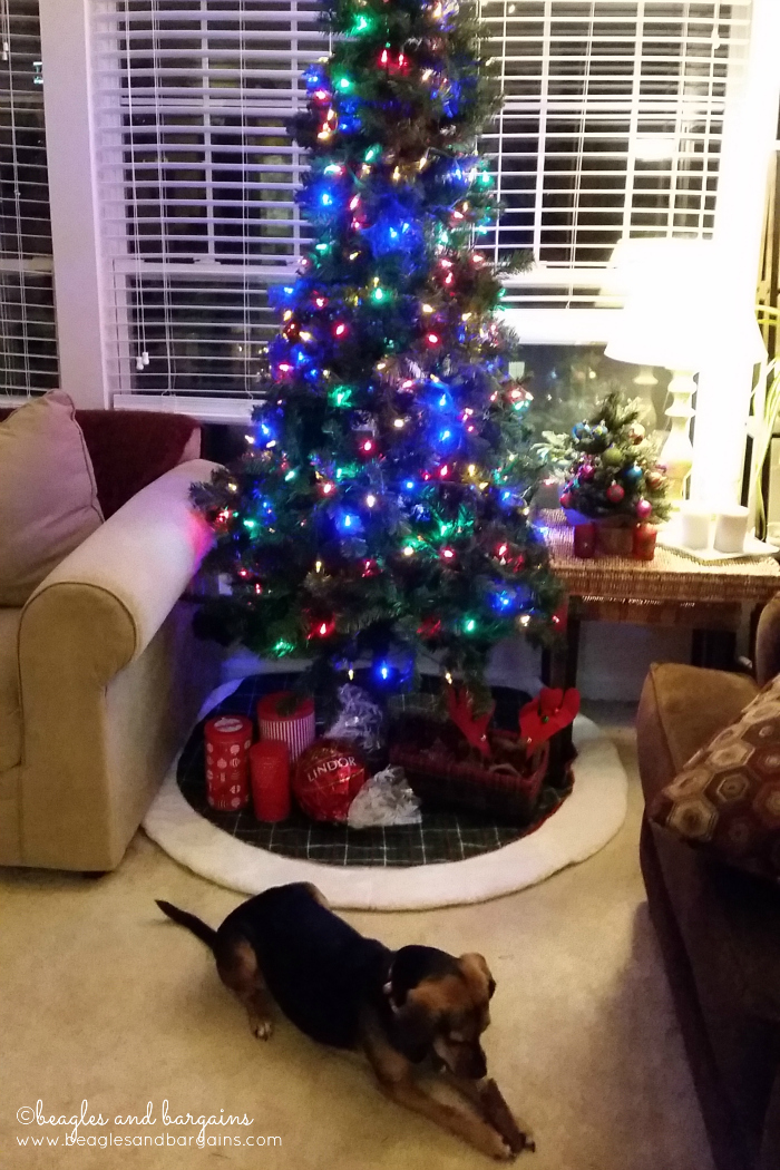 Luna and our Christmas Tree 2015
