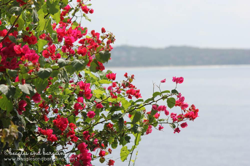 Beautiful flowers in Puerto Escondido, Mexico