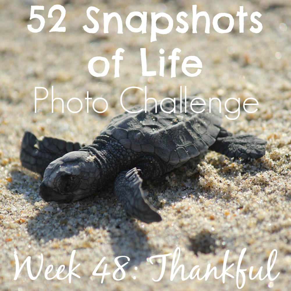 52 Snapshots of Life - Week 48 - Thankful - Thankful for a Vacation!