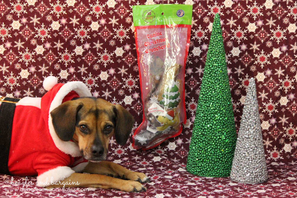 Luna can't wait to try Jones Natural Chews Canine Christmas Crunchers