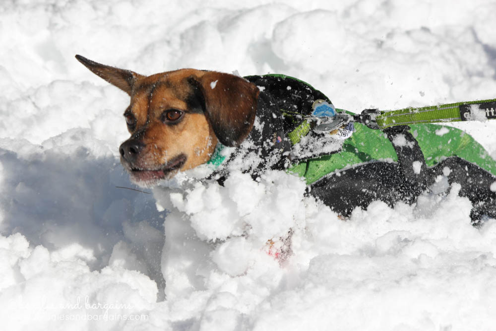 Luna swims through 2.5 feet of snow