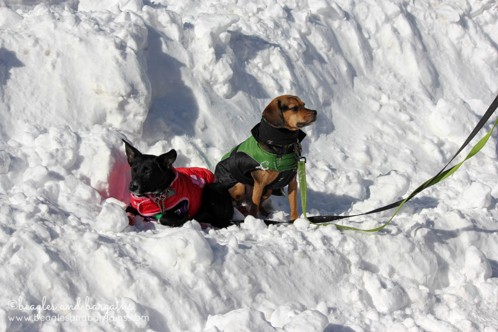 Ralph and Luna enjoy the snow during Blizzard 2016 - Winter Storm Jonas