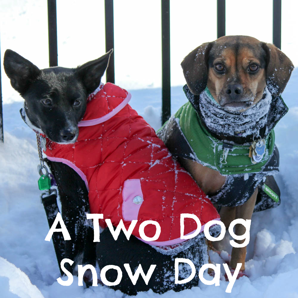 A Two Dog Snow Day