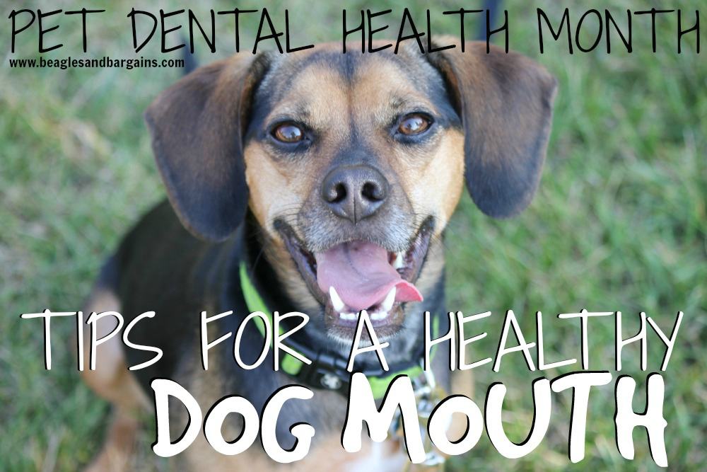 Pet Dental Health Month - Tips for a Healthy Dog Mouth