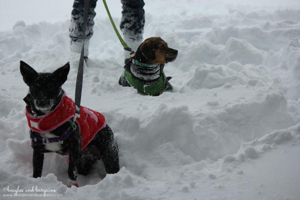 Ralph and Luna enjoy the snow from Winter Storm Jonas - Blizzard 2016