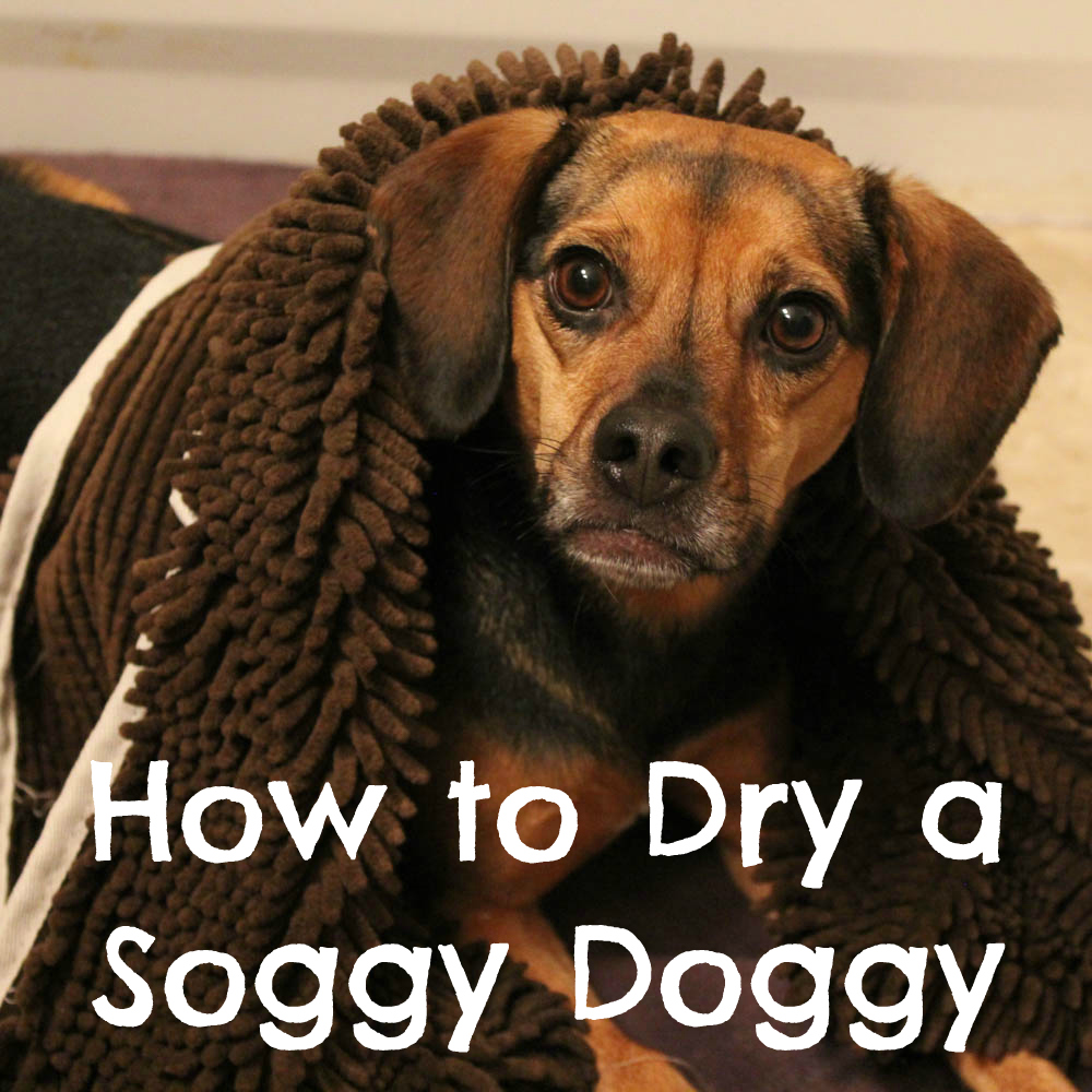 How to Dry a Soggy Doggy
