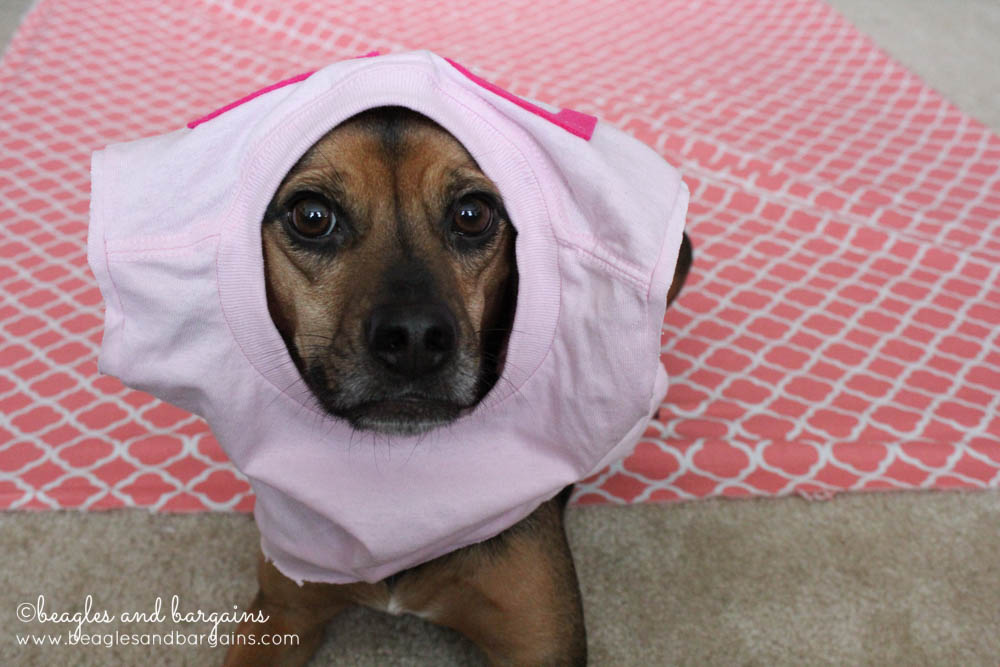 Luna fails to model - Pet Blogger Bloopers