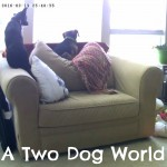 A Two Dog World Through the Lens of a Vimtag Indoor Camera