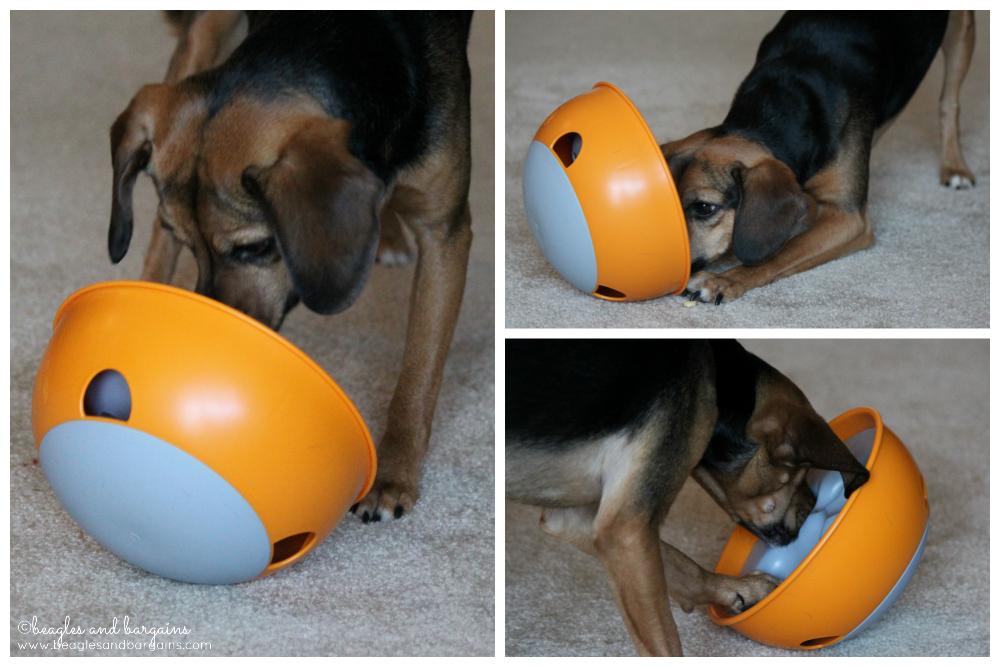 Luna plays with her orange PAW5 Rock 'N Bowl