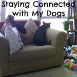 How I Stay Connected with My Dogs Through My Vimtag Indoor Camera