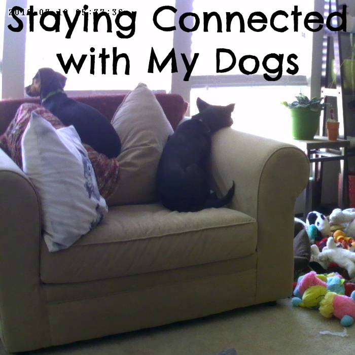 Staying connected with my dog
