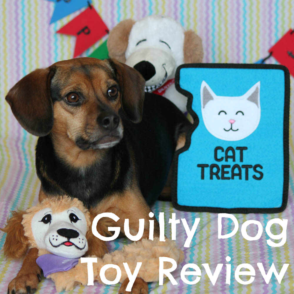 Guilty Dog Toy Review