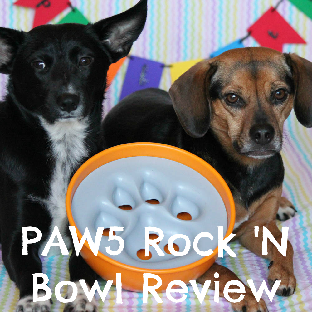 PAW5 Rock 'N Bowl Review