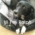 Hi I'm Ralph – A Foster Dog's Story