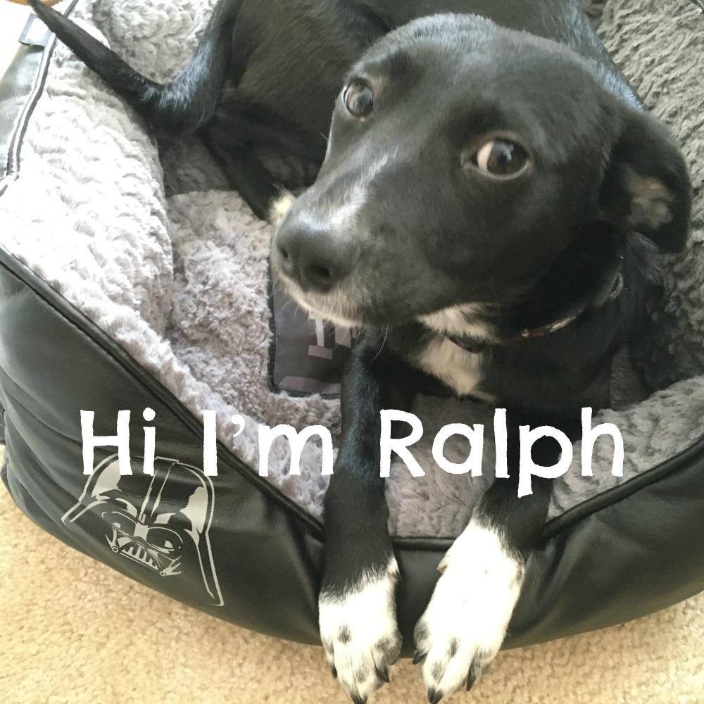 Hi I'm Ralph