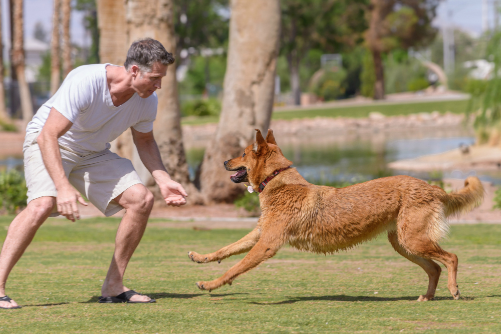 Save on Gym Fees. Exercise with Your Dog!