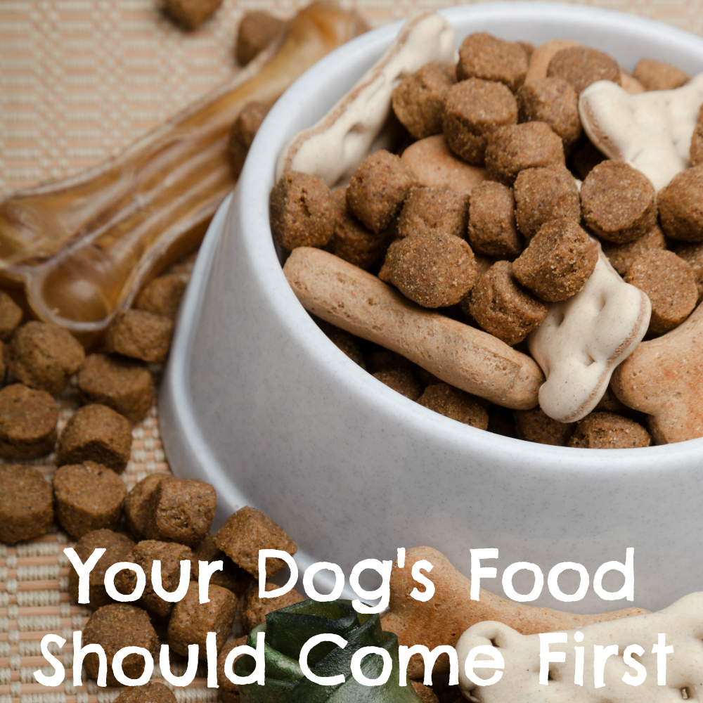 Why Your Dog's Food Should Always Come First