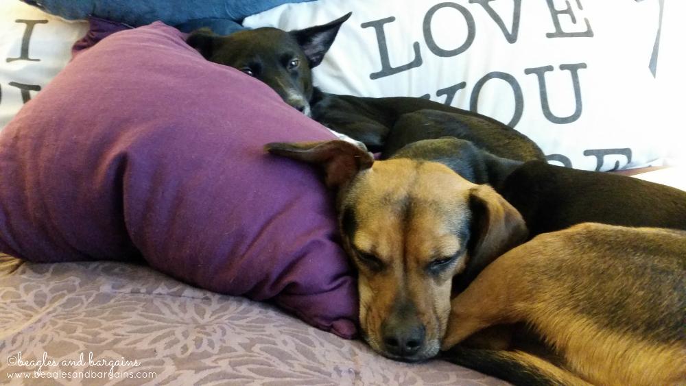 Luna and Ralph snuggled in bed