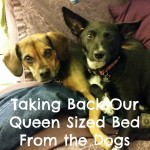 A Chance to Take Back Our Queen Sized Bed From Our Dogs