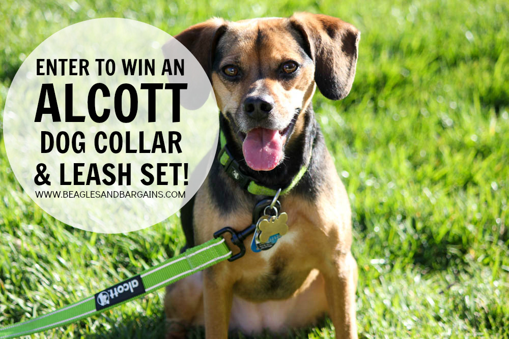 Enter to win an Alcott Dog Collar and Leash Set