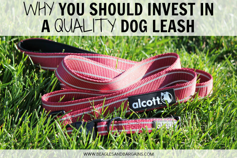 Why You Should Invest in a Quality Dog Collar & Leash