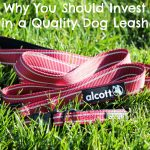 Spend More on Quality Dog Collars & Leashes. Save More Money Overall.