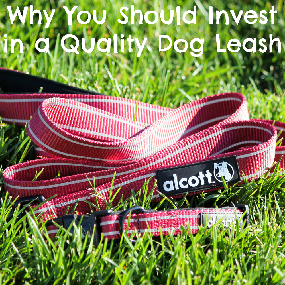 Why You Should Invest in a Quality Dog Leash