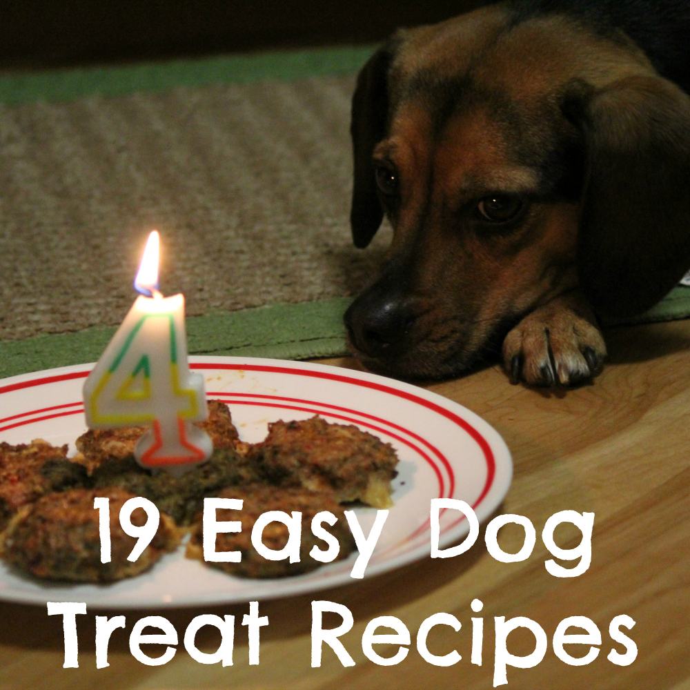 19 Easy Dog Treat Recipes