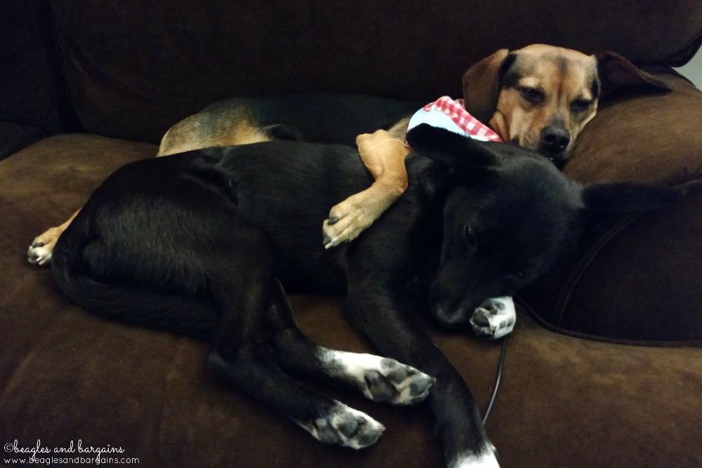 Ralph and Luna make the best nurses when migraines hit
