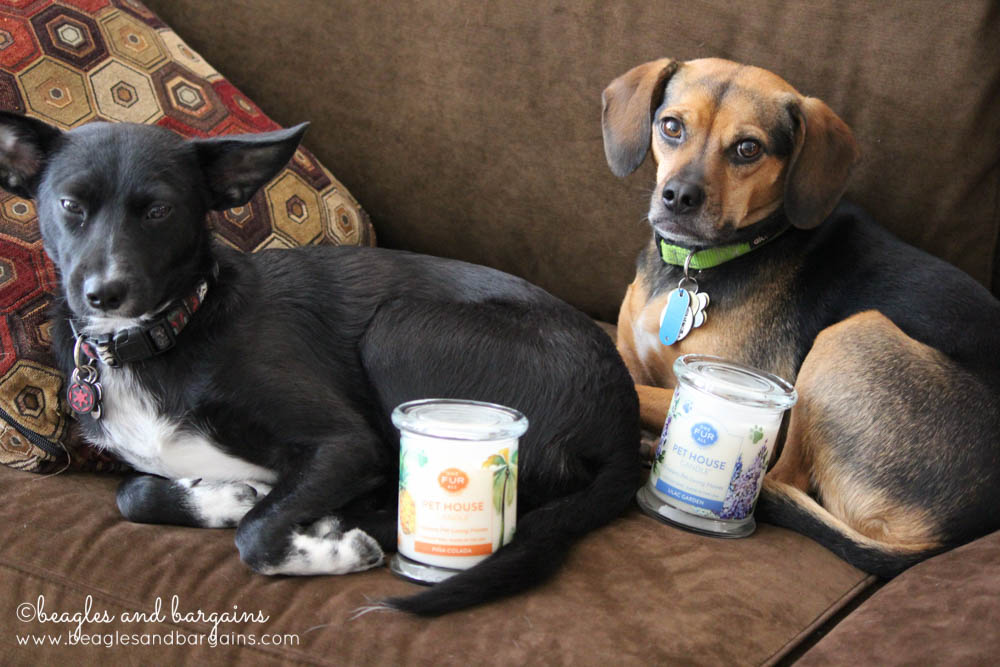 Soy candles from One Fur All are safer for pets and people!