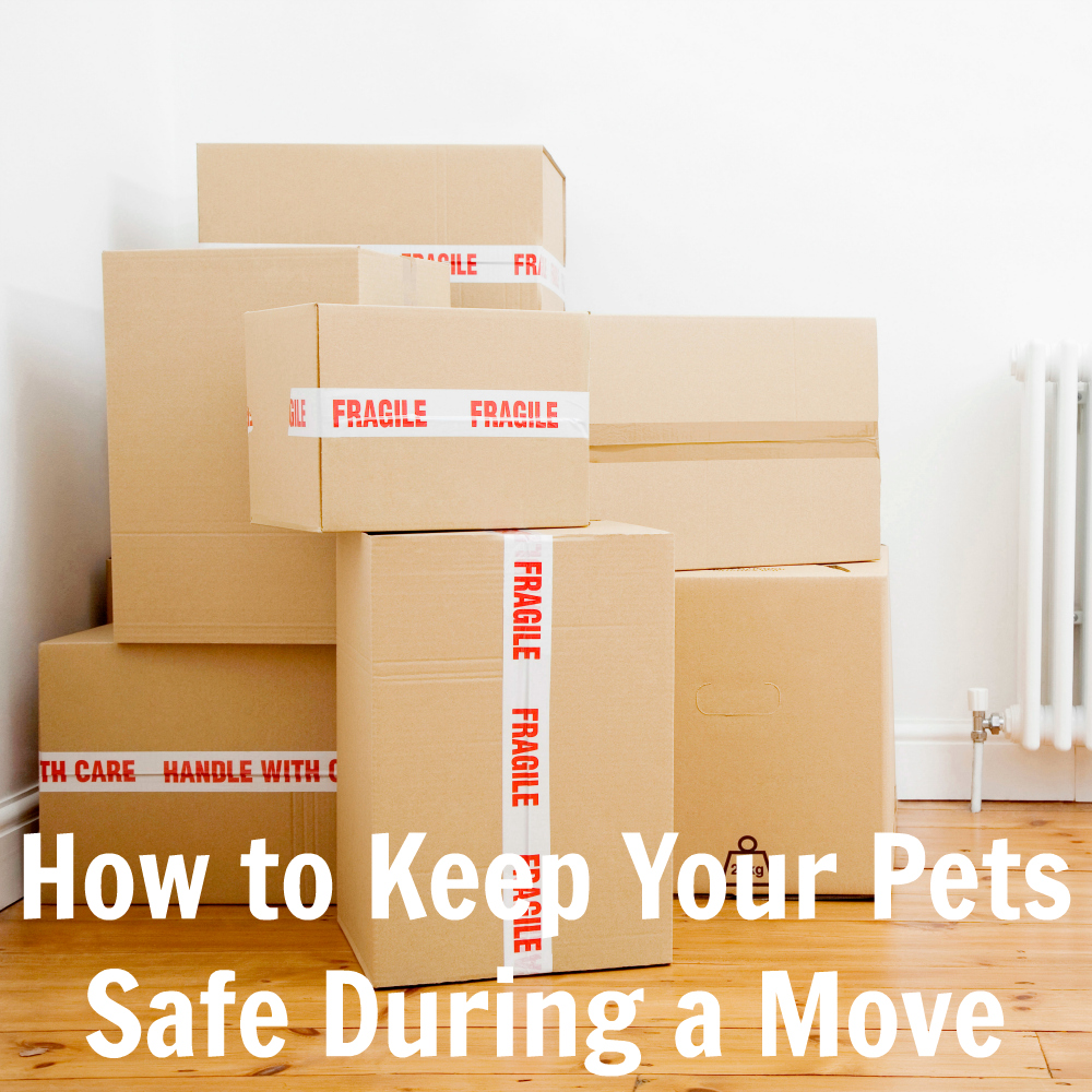 How to Keep Your Pets Safe During a Move - Lost Pet Prevention Month
