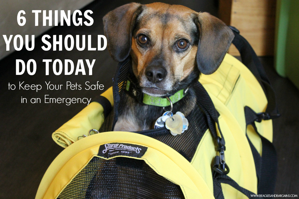 6 Things You Should Do Today to Keep Your Pets Safe in an Emergency