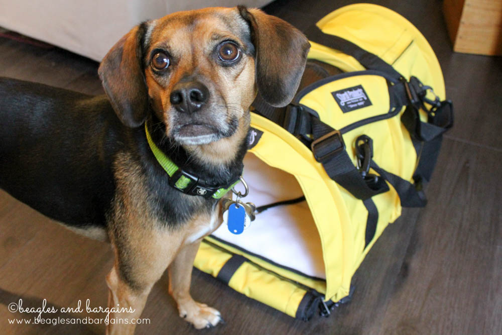 Sturdi Products SturdiBag comes in a variety of sizes and bright colors to fit your dog perfectly.