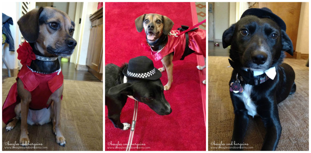 Strutting down the red carpet for Nose-to-Nose Awards at BlogPaws 2016