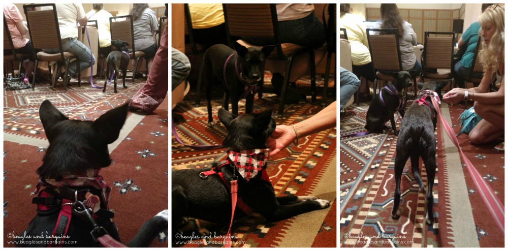 Ralph meets his twin, Marsha from S'More Dogs, at BlogPaws 2016