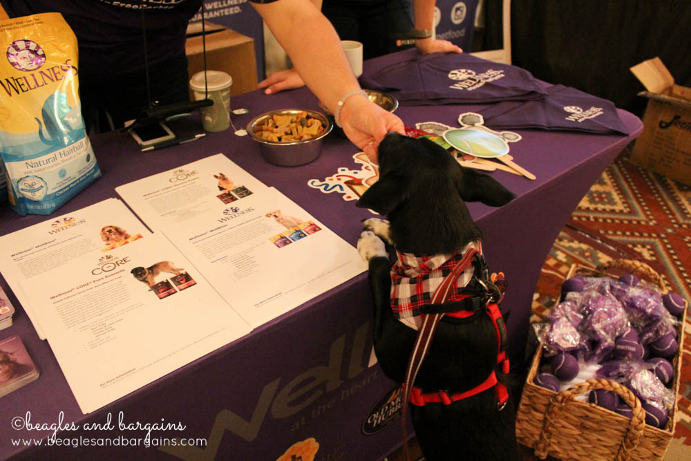 Ralph loves Wellness Pet Food and all their tennis balls during BlogPaws Conference 2016.
