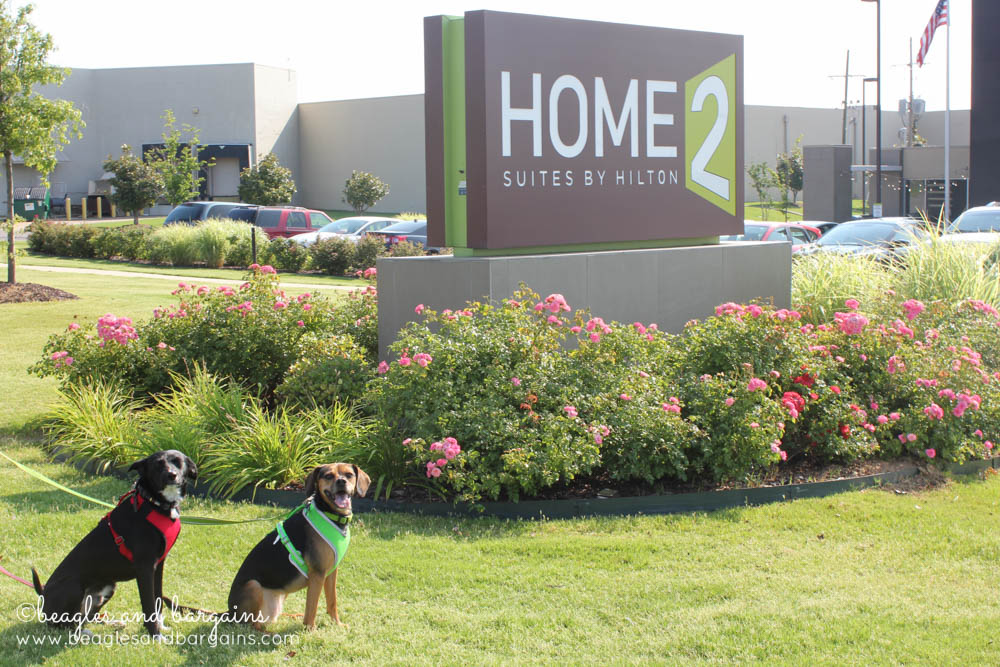 Luna and Ralph enjoy their pet friendly hotel stay at Home2 Suites in Southaven!