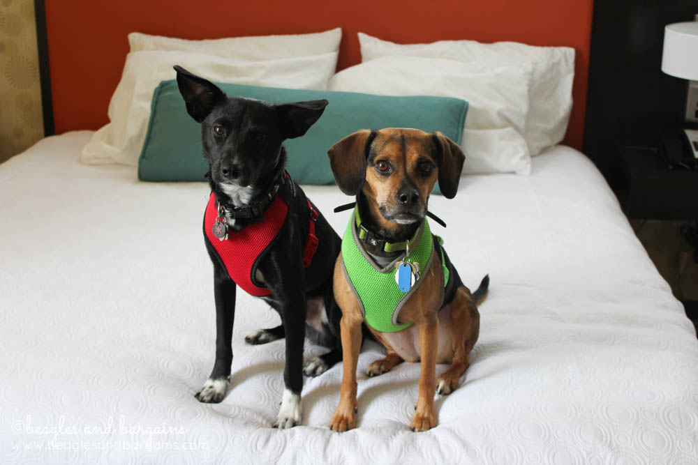 Luna and Ralph enjoy the comfortable beds at Home2 Suites by Hilton in Southaven.