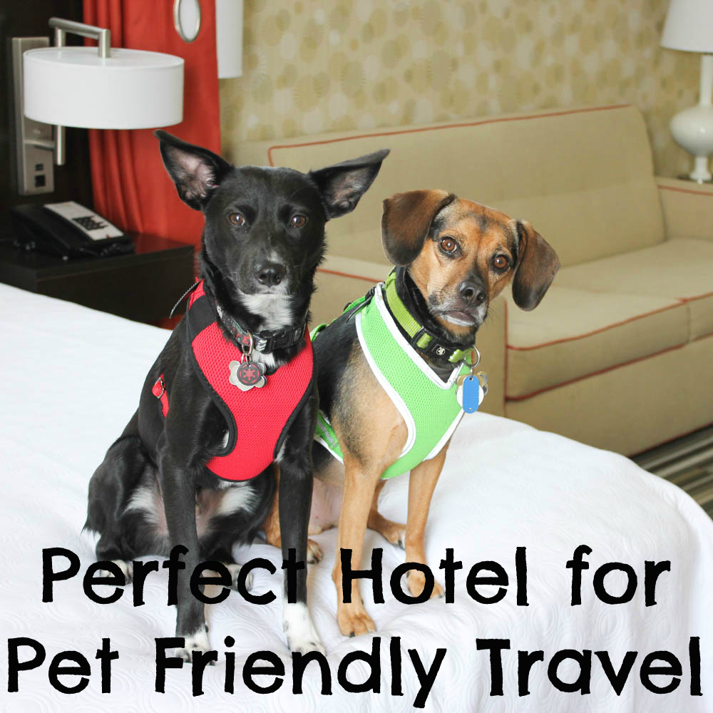 Home2 Suites by Hilton is Perfect for Pet Friendly Travel
