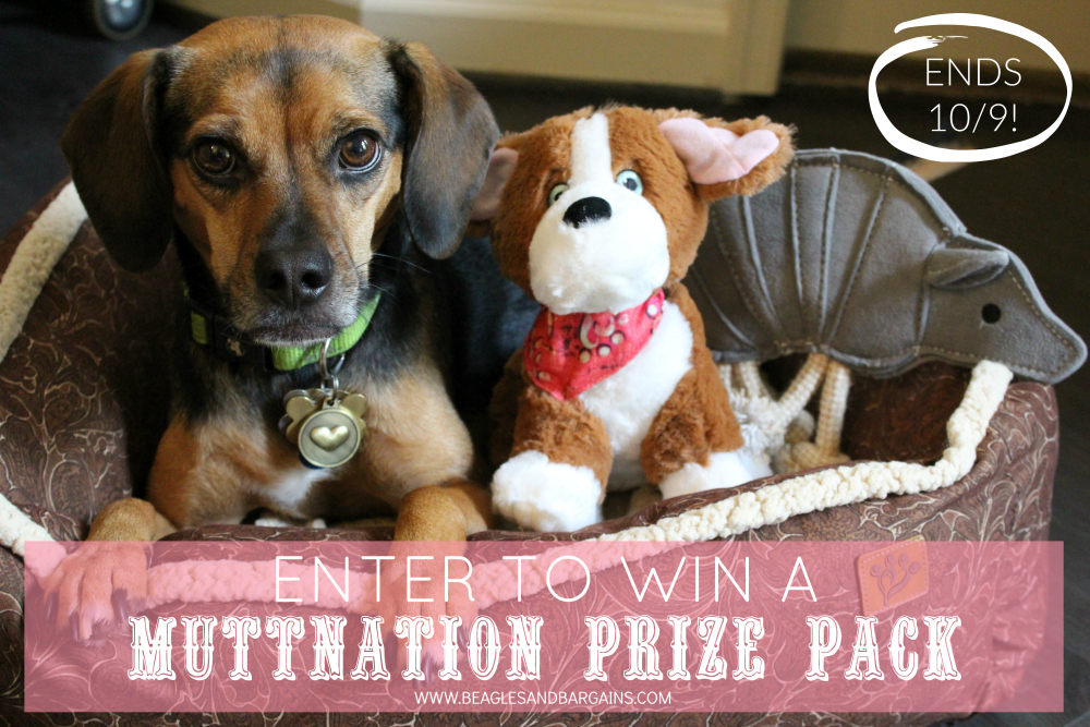Enter to win a MuttNation Prize Pack for dogs!