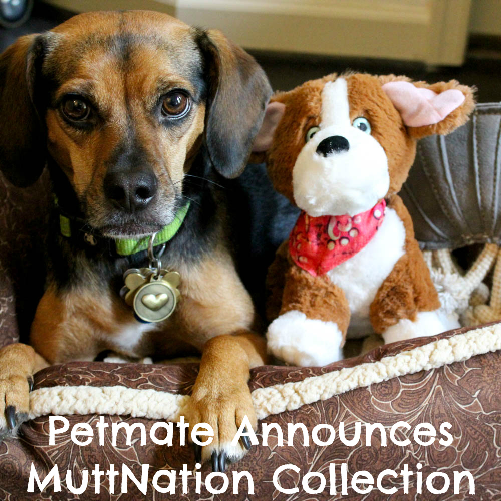 Petmate Announces All New MuttNation Collection Fueled by Miranda Lambert