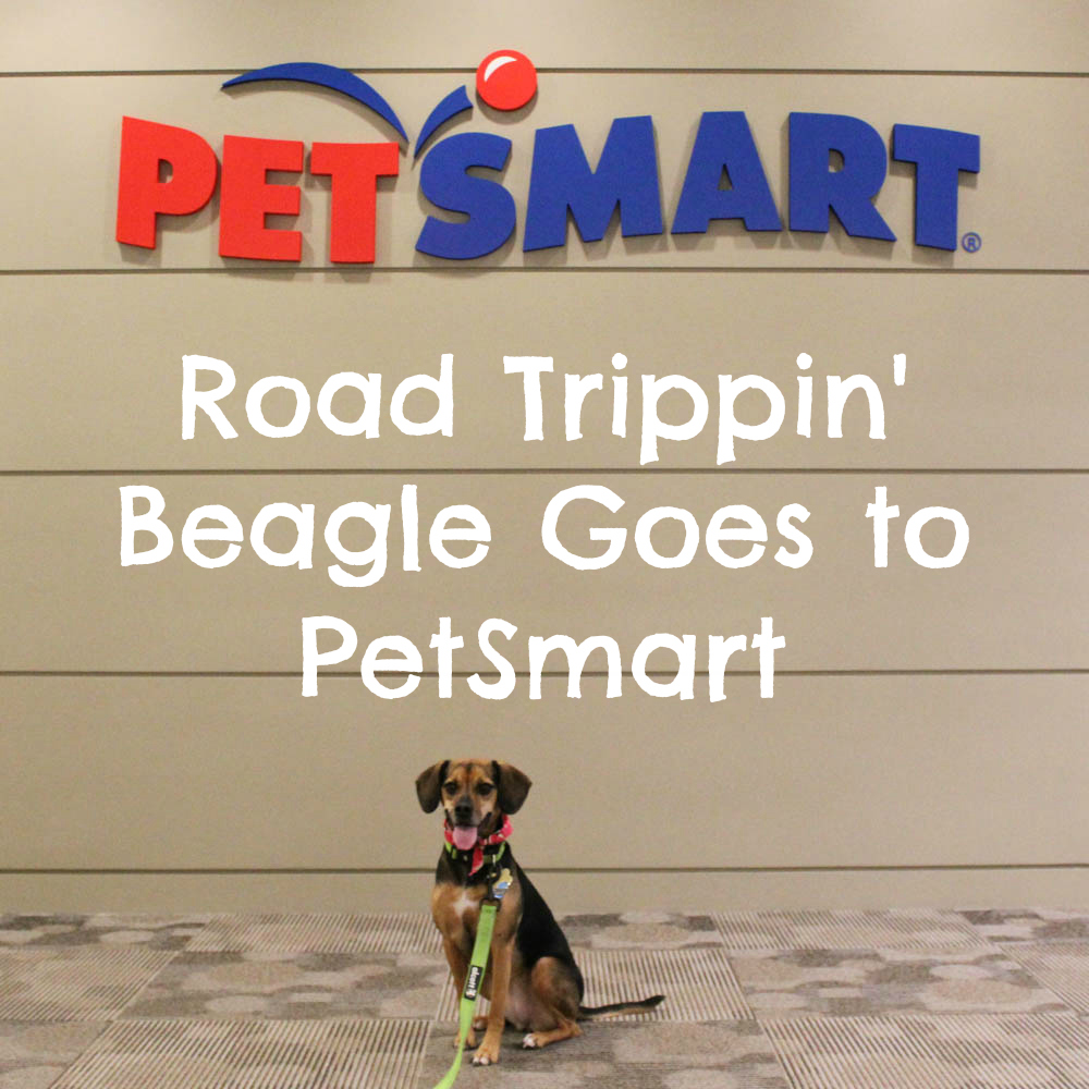 Road Trippin' Beagle Goes to PetSmart