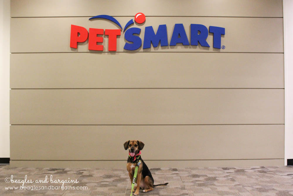 Luna at the PetSmart Home Office in Phoenix